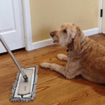 Top 7 Best Mop for Dog Hair Reviews for 2021