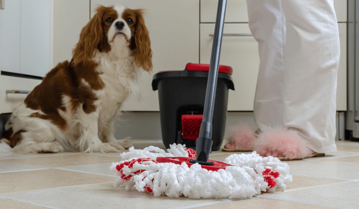 best mop for pets