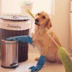 Best Dust Mop for Pet Hair Reviews 2021