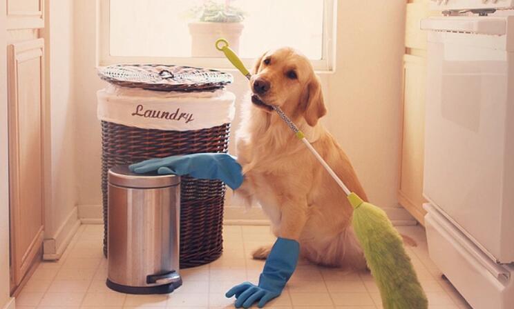 dust mop for pet hair
