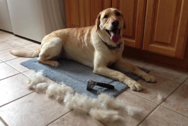 mop pet hair