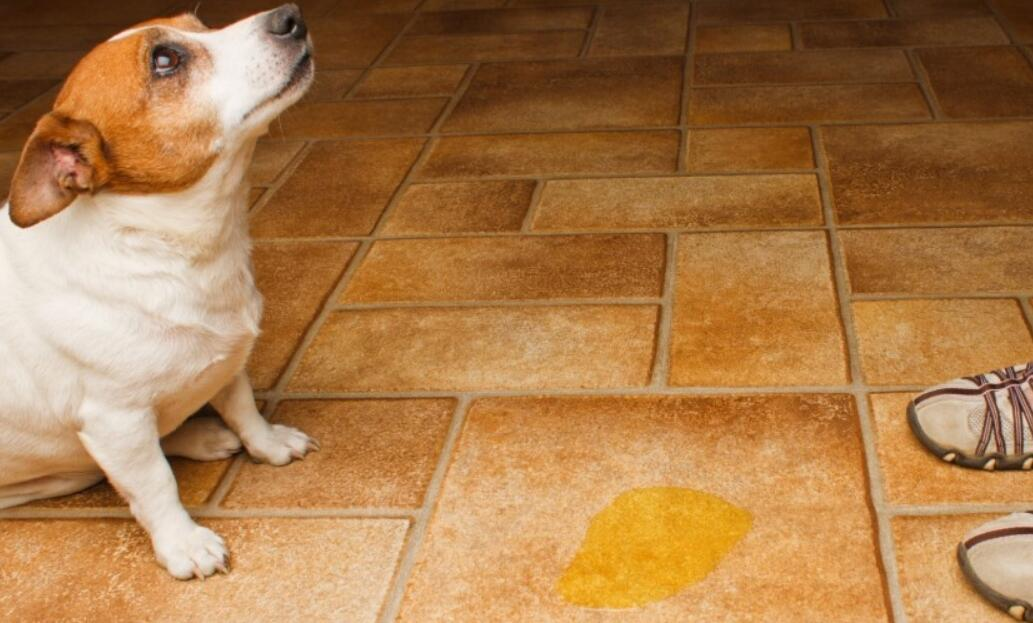 best mop for dog urine