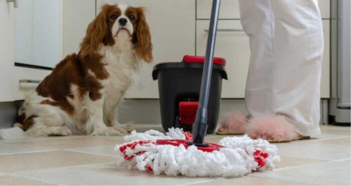 cleaning dog urine mop
