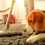Best Mop for Pet Hair - Reviews and Buyer's Guide in 2021
