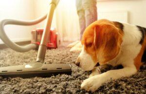 best mop for pet hair reviews