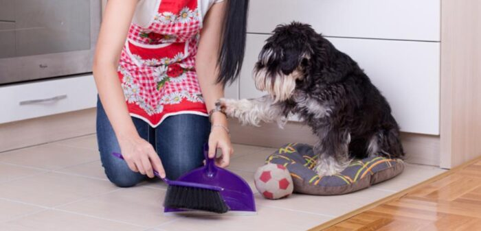 use vacuum steam mop lint roller to removee dog hair