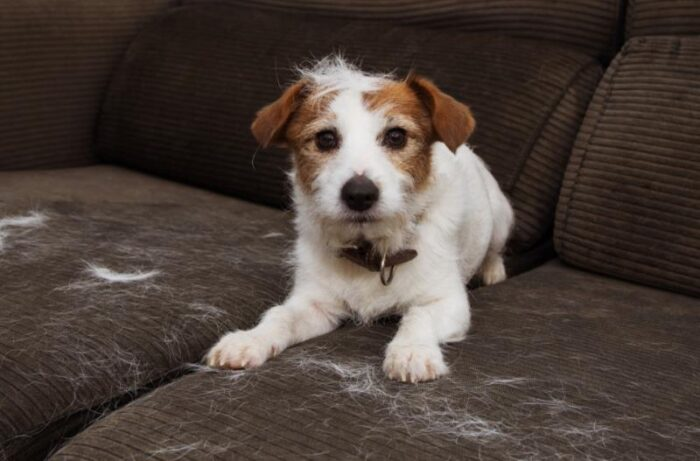 tips to clean dog hair on sofa