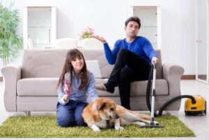 how to get dog hair out of carpet diy