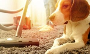 steam mop for dogs