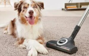 how to get dog hair off carpet